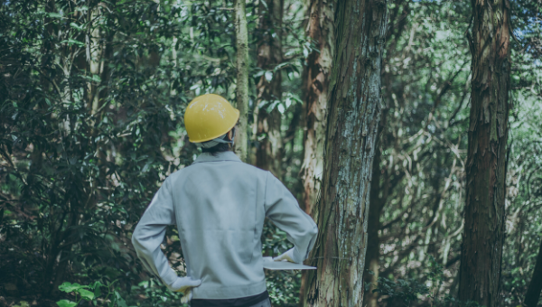 Artificial Intelligence and the Forestry Sector